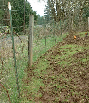 Perimeter fencing: standard woven wire field fencing with 2 strands of barbed wire for multi-species use. This pasture has been vacated by Guinea Hogs who lived here for 4 months before being rotated to another pasture. Photo courtesy of Audacious Acres, March 2007
