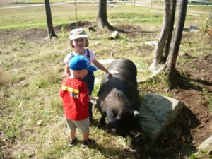 The grandkids with an adult Guinea Hog. Photo courtesy of Sullbar Farm.