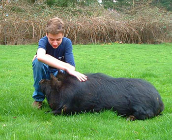 16-year-old Ethan pets his 1-year-old boar. Photo courtesy of Audacious Acres, March 2007.