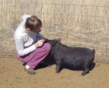 AGHA Micki with a 5-month-old gilt