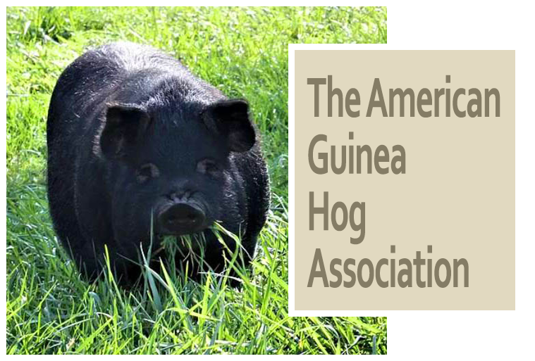 The American Guinea Hog Association